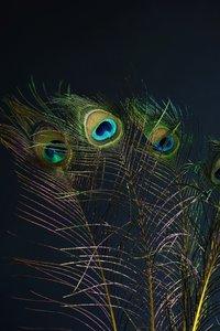 Pauwenveren Geel